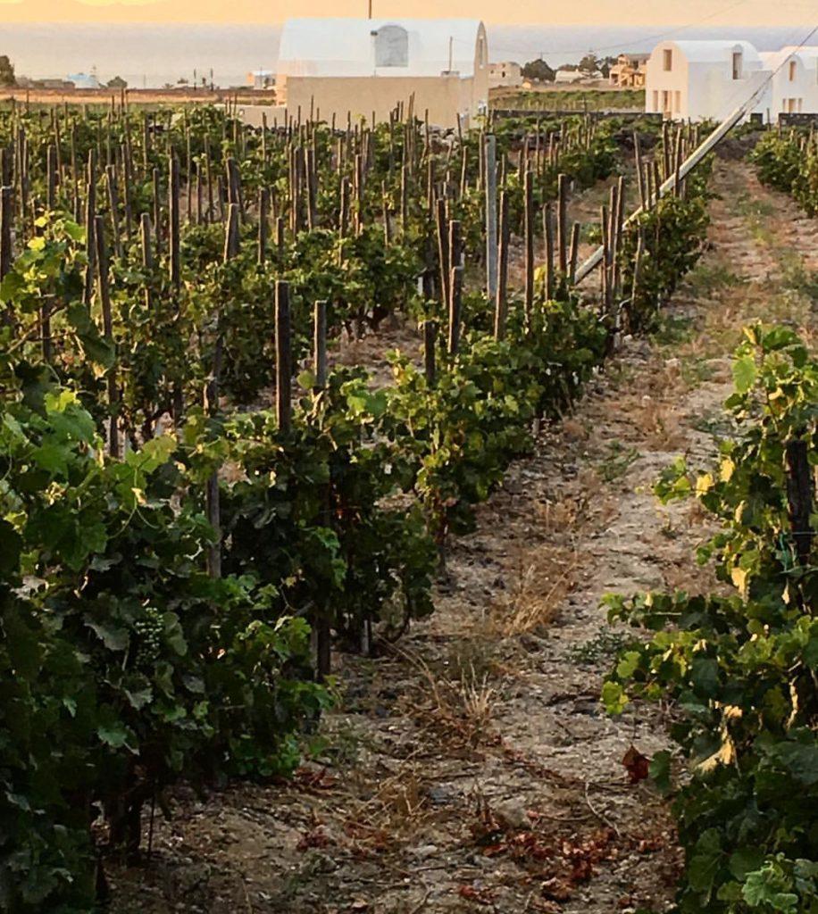 vins de santorin